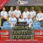 Animal Trapping Houston Company Gulf Coast Exterminators