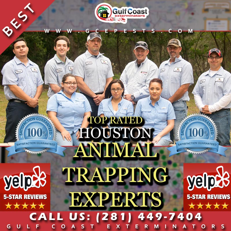 Houston Raccoon Removal and Animal Trapping Company Gulf Coast Exterminators