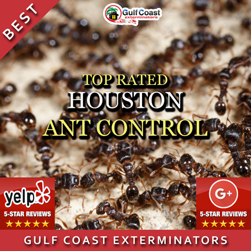 Gulf Coast Exterminators performs the best ant control that's reasonably priced in Houston, TX and surrounding areas.