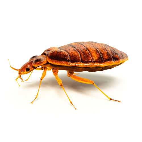 Pest Control Service by Pest Control Houston company Gulf Coast Exterminators
