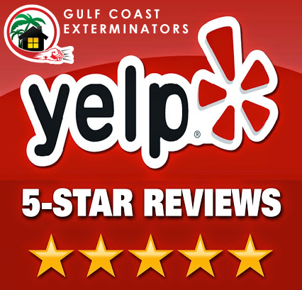 Houston Flea control company Gulf Coast Exterminators with 5 star reviews on Yelp