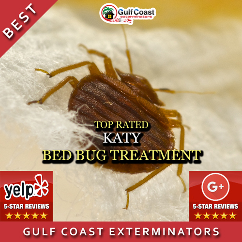 Katy bed Bug Treatment Services by Gulf Coast Exterminators. Katy Bed Bug Treatment Services   Pest Control Katy TX Gulf Coast