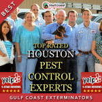 Pest Control Houston Experts, Gulf Coast Exterminators