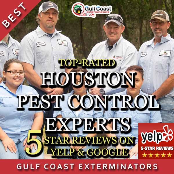 Pest Control Houston Gulf Coast Exterminators Team