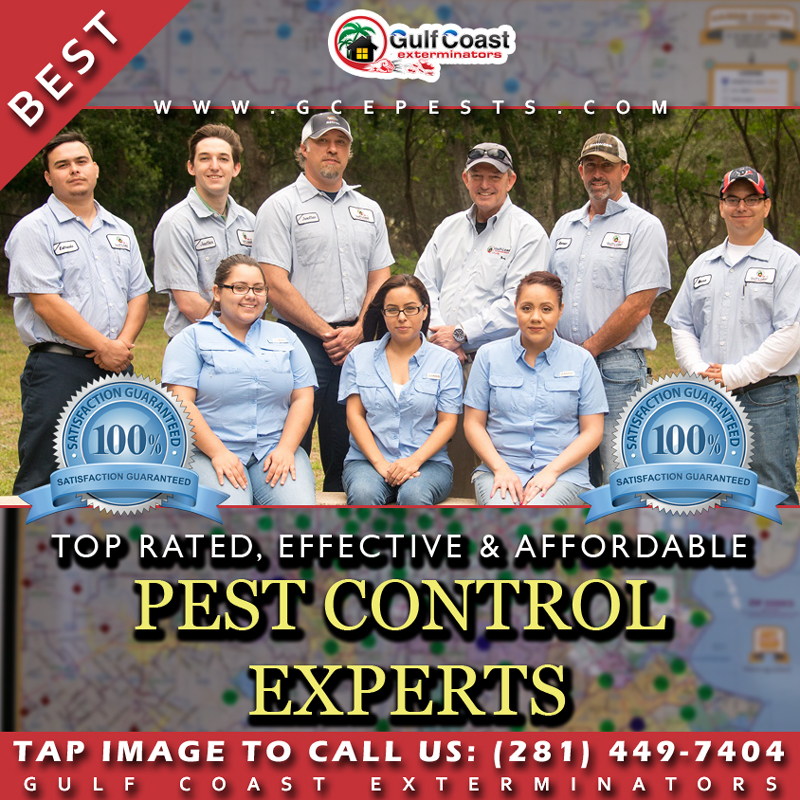 Tap Image to Call Gulf Coast Exterminators on mobile device