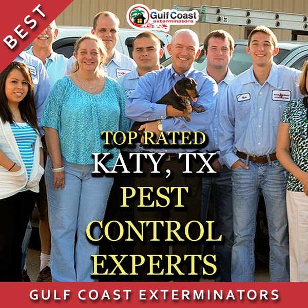 Pest Control Katy TX Experts, Gulf Coast Exterminators