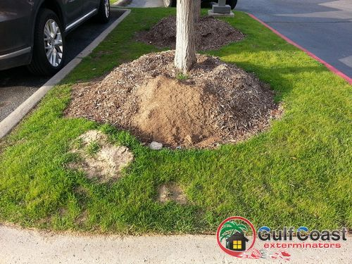 Red Imported Fire Ant Control in Houston