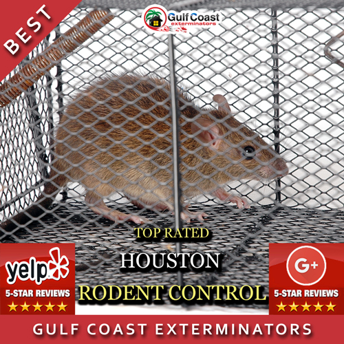 Gulf Coast Exterminators performs the best rodent control that's reasonably priced in Houston, TX and surrounding areas.