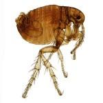 Pest Control Service by Pest Control Houston company Gulf Coast Exterminators