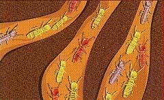 termite-control-houston-tx-2