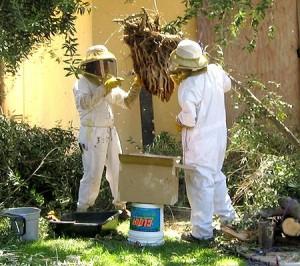 Bee keepers
